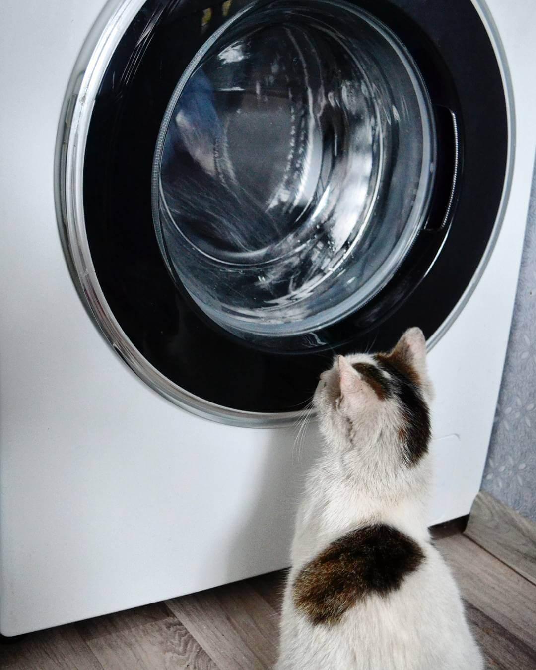 Кот и стиральная машина